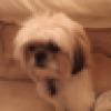 Cutie1-#SuperElite's avatar