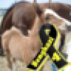 Stella's avatar