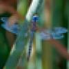 libellule 🌹's avatar