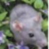 Mus Decumanus's avatar