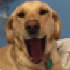 Bob Cohn's avatar