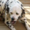 ✝🙏M. T.🙏✝🚂💨's avatar