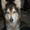 jerri wolf's avatar