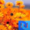 T Gard's avatar