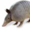 D. M. Candiru's avatar