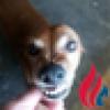 JayleeSpring's avatar