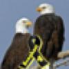 PatrioticAmericanMom's avatar