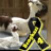 LookUpFolks's avatar