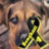 ❌SK❌'s avatar