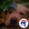 MAGA 🇺🇸's avatar
