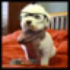 AdamLowisz's avatar