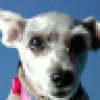 Sandi Curry's avatar