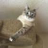 Poppie Hart's avatar