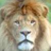 Kubu's avatar