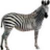 Zebra Ramen's avatar