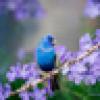 Belle🌟🌟🌟#The200's avatar