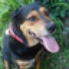 Chev146's avatar