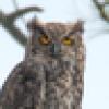 TRINITYPREZ's avatar