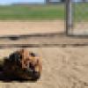Baseball Guy from Cali's avatar