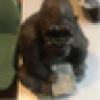 Harry Siegel's avatar
